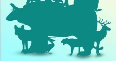 MOZGALICA: Koliko životinja se krije na ovoj slici? SAMO RIJETKI POGODE TAČAN BROJ